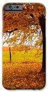 One Autumn Tree iPhone Case by Terri Gostola