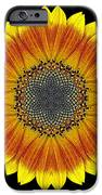 Orange and Yellow Sunflower Flower Mandala iPhone Case by David J Bookbinder