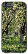 Orchard iPhone Case by Anonymous