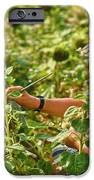 Picture in a Picture iPhone Case by Heiko Koehrer-Wagner