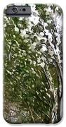 Pine tree covered with snow iPhone Case by Lanjee Chee