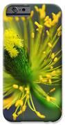 Poppy Seed Capsule 2 iPhone Case by Kaye Menner