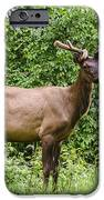 Posing iPhone Case by Carolyn Marshall