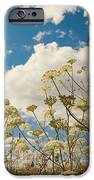 Queen Anne Lace and Sky iPhone Case by Jenny Rainbow