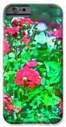 Rose 201 iPhone Case by Pamela Cooper