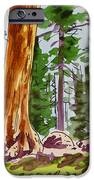 Sequoia Park - California Sketchbook Project  iPhone Case by Irina Sztukowski