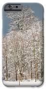 Snow covered trees in the forest in winter iPhone Case by Matthias Hauser