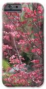 Spring Neighborhood iPhone Case by Carol Groenen