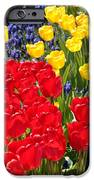 Spring Sunshine iPhone Case by Carol Groenen