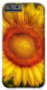 Sunflower iPhone Case by Adrian Evans