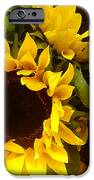 Sunflowers iPhone Case by Amy Vangsgard
