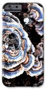 Surprising II iPhone Case by Carlee Ojeda
