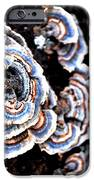 Surprising II iPhone Case by Carlee Ojeda