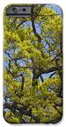 Tangled In Time iPhone Case by Pamela Gail Torres