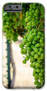 The Vineyard iPhone Case by David Morefield