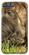 THERE IS NOTHING BETTER THAN A BONE AND SOME WARM GRASS iPhone Case by Jeff  Swan