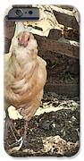 There's  a Chicken in the Hen House iPhone Case by Artist and Photographer Laura Wrede