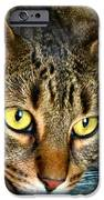 Tiger Time iPhone Case by Michelle Milano