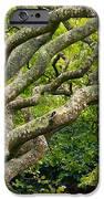Tree #1 iPhone Case by Stuart Litoff