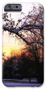 Trees in Wintry Pennsylvania Twilight iPhone Case by Anna Lisa Yoder