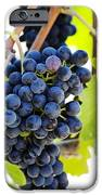 Vineyard Grapes iPhone Case by Charmian Vistaunet