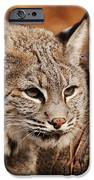 What A Face iPhone Case by Lori Tambakis