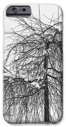 Wild Springtime Winter Tree Black and White iPhone Case by James BO  Insogna