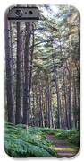 Woodland path iPhone Case by David Isaacson