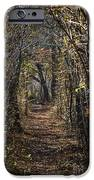 Woodland Path iPhone Case by John Greim
