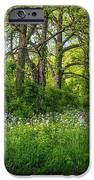 Woodland Phlox   iPhone Case by Steve Harrington