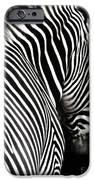Zebra on Black iPhone Case by Elle Arden Walby