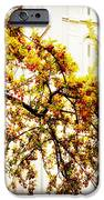 Branch of Heaven iPhone Case by La Rae  Roberts