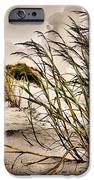 Sea Oats iPhone Case by Kristin Elmquist