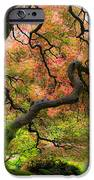 Tree of Beauty iPhone Case by Steve McKinzie