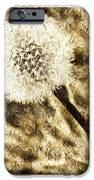 A Dandy Glow iPhone Case by Andee Design