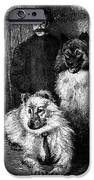 Arctic Explorer And Dogs, 19th Century iPhone Case by