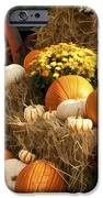Autumn Bounty iPhone Case by Kathy Clark