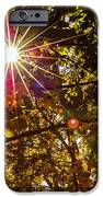 Autumn Sunburst iPhone Case by Carolyn Marshall