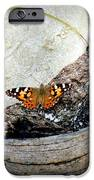Beauty On the Beach iPhone Case by KAREN WILES