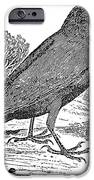 BEWICK: RAVEN iPhone Case by Granger