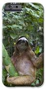 Brown Throated Three Toed Sloth Male iPhone Case by Suzi Eszterhas