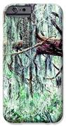 Cedar draped in Spanish Moss iPhone Case by Thomas R Fletcher