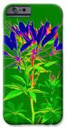 Cleome gone abstract iPhone Case by Kim Galluzzo Wozniak