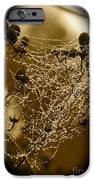 Dewdrop Cameo iPhone Case by Carol Groenen