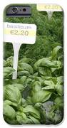 European Markets - Basil and Dill iPhone Case by Carol Groenen