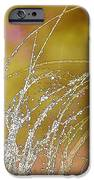 Fall Grass iPhone Case by Artist and Photographer Laura Wrede