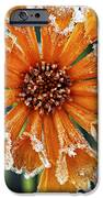 Frosty flower iPhone Case by Elena Elisseeva