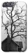 Gnarled iPhone Case by Pamela Patch