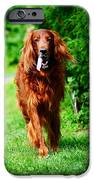 Irish Setter V iPhone Case by Jenny Rainbow