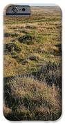 Landscape With Cow Grazing In The Field . 7D9942 iPhone Case by Wingsdomain Art and Photography